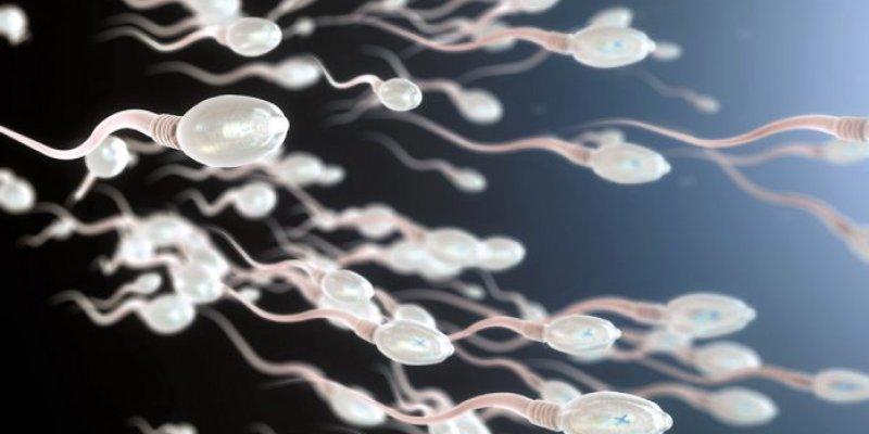 Calor pode ameaçar a fertilidade masculina